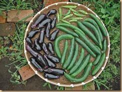 06野菜の収獲13-7-31