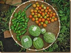 07野菜の収獲13-7-31