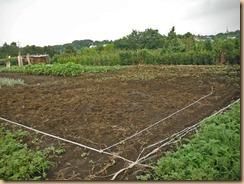 01ほぼ雑草整理が済んだ#5農園13-8-2