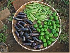 02野菜の収獲13-8-11