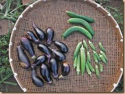 03野菜の収獲13-8-22