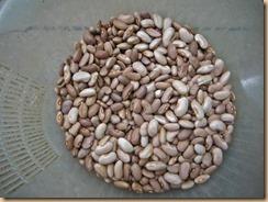 03インゲン豆の収獲13-8-23