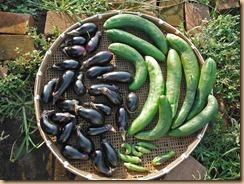 03野菜の収獲13-8-29