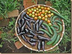 03野菜の収獲13-8-2