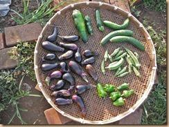 04野菜の収獲13-8-19