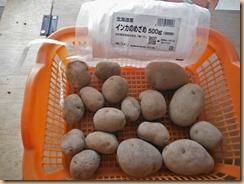 02種芋インカのめざめ14-1-23