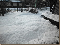 01雪景色14-2-09