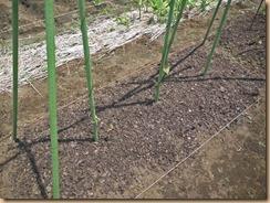 01ヤマトイモに腐葉土施肥14-5-30