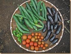 01野菜の収獲14-6-27