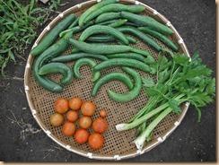 03野菜の収獲14-6-29