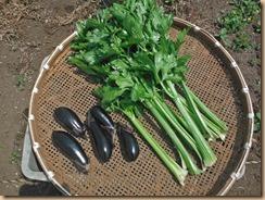 04野菜の収獲14-6-20