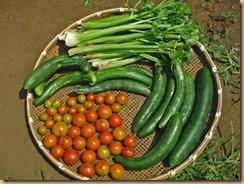 02野菜の収獲14-7-26