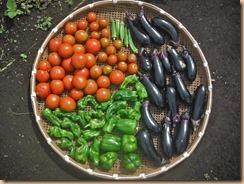 02野菜の収獲14-7-6