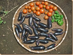 03野菜の収獲14-7-1