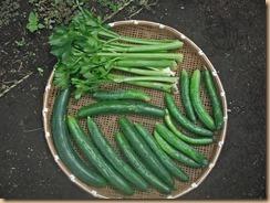03野菜の収獲14-7-6