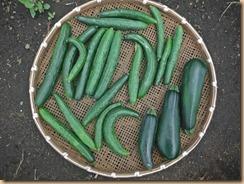 04野菜の収獲14-7-1