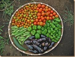 03野菜の収獲14-8-12