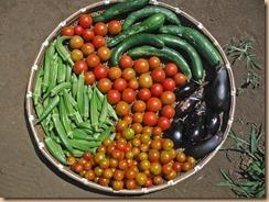 03野菜の収獲14-8-5