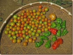 05野菜の収獲14-8-19