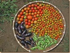 07野菜の収獲14-8-24