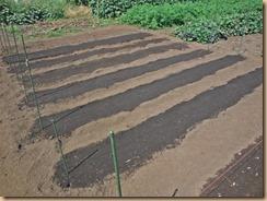 01冬野菜の種蒔き14-9-22