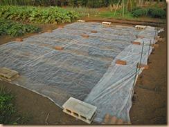 02防虫シートと不織布でマルチング14-9-22