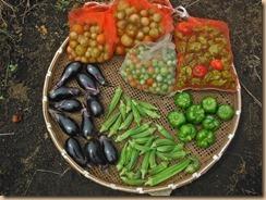 03野菜の収獲14-8-31