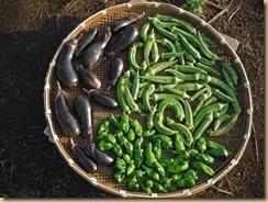 03野菜の収獲14-9-12