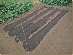 03種蒔き覆土鎮圧14-9-24