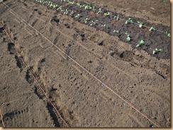 02そら豆の種蒔き14-10-30