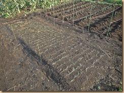 08タマネギ苗床の雑草整理14-10-6