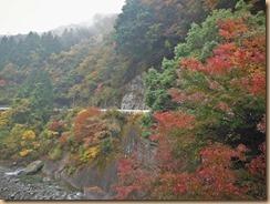 01早戸川の紅葉14-11-12