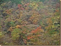 03早戸川の紅葉14-11-12