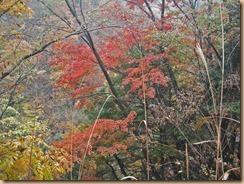 04早戸川の紅葉14-11-12
