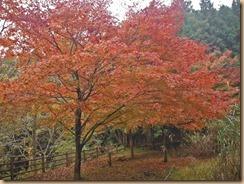 06早戸川の紅葉14-11-12