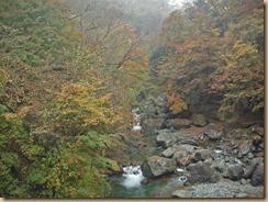 07早戸川の渓流に映える紅葉14-11-12