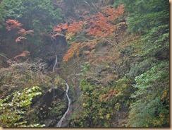 08早戸川の渓流に映える紅葉14-11-12