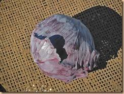 02初収獲した紫キャベツ14-12-22