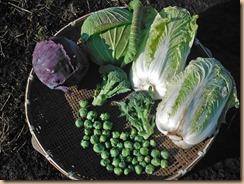 02野菜の収獲14-12-26