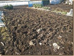 02雑草整理・土起こしたジャガイモ用地15-2-10