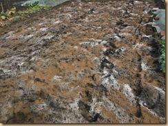 02有機石灰・鶏糞堆肥を散布15-2-25