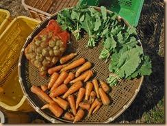 01野菜の収獲15-3-12