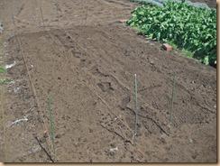 02混ぜてから畝を均す15-3-24