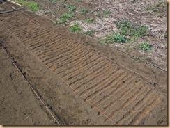 02溝の中に用土を入れる15-3-25