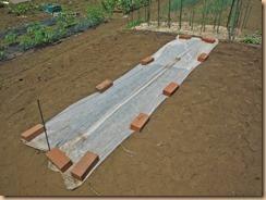 01サラダカボチャの種蒔き15-5-27