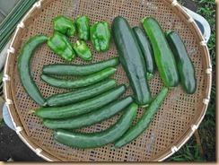 01野菜の収獲15-6-14