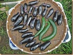 02野菜の収獲15-6-29