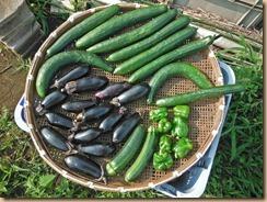 03野菜の収獲15-6-25