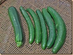 03野菜の収獲15-6-30