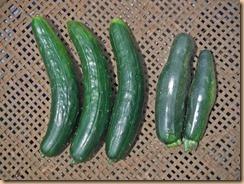 05野菜の収獲15-6-2